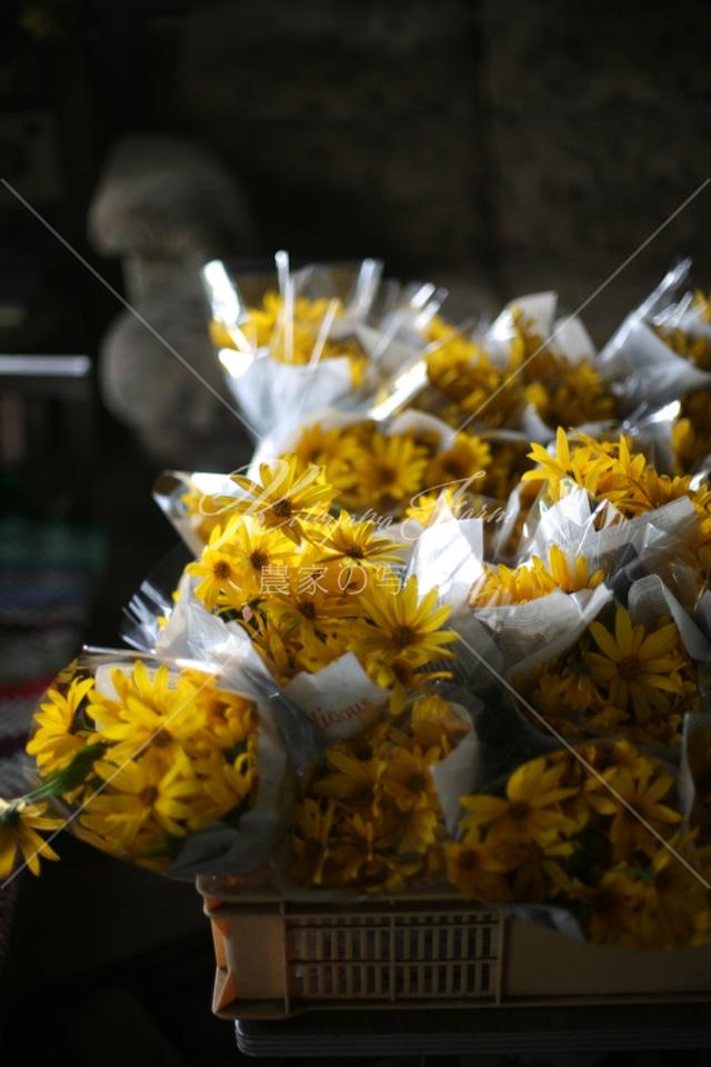 196 菊芋の花束「食用花」