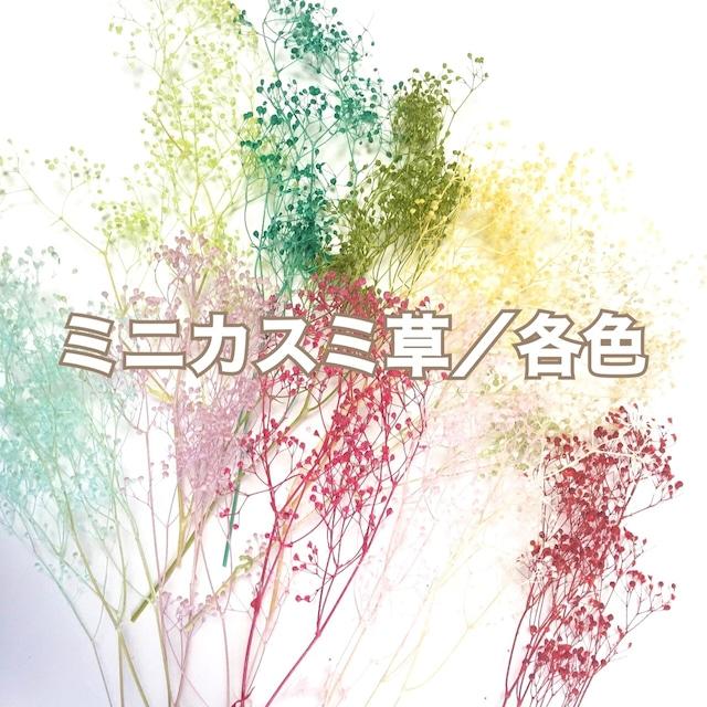 ソフトミニカスミ草/各色 【花材・プリザーブドフラワー】