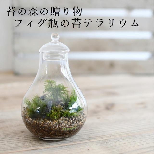 【苔の森の贈り物】苔テラリウム フィグ瓶 ◆プレゼントにおすすめ