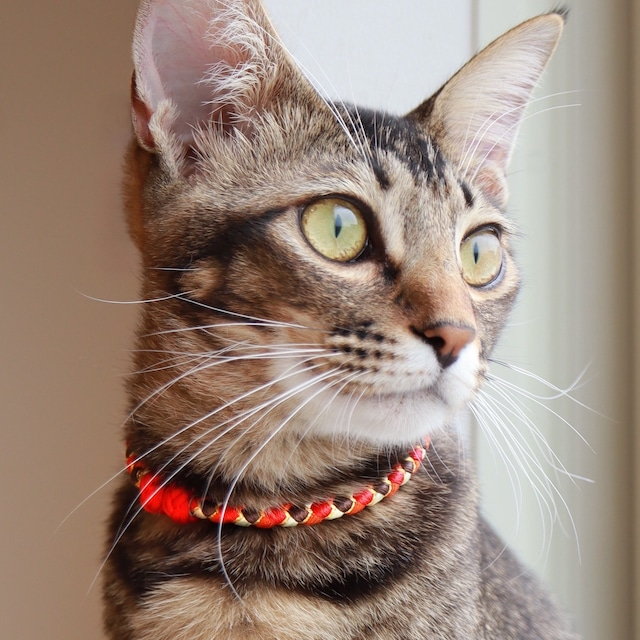 【猫首輪】Soleil ソレイユ  19年モデル