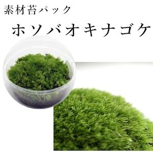 ホソバオキナゴケ 苔テラリウム作製用素材苔