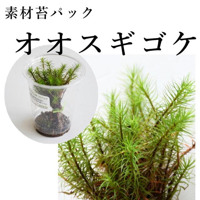 オオスギゴケ 苔テラリウム作製用素材苔