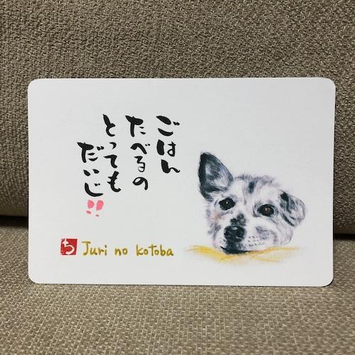 ポストカード 80(じゅり)