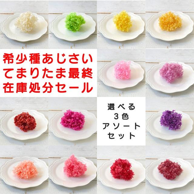 【希少種】 山アジサイ「てまりたま」(プリザーブド) 全11色から 選べる3点1000円 <紫陽花・アジサイ>