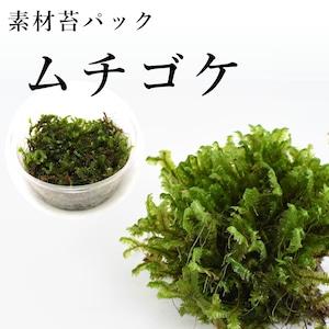 ムチゴケ 苔テラリウム作製用素材苔