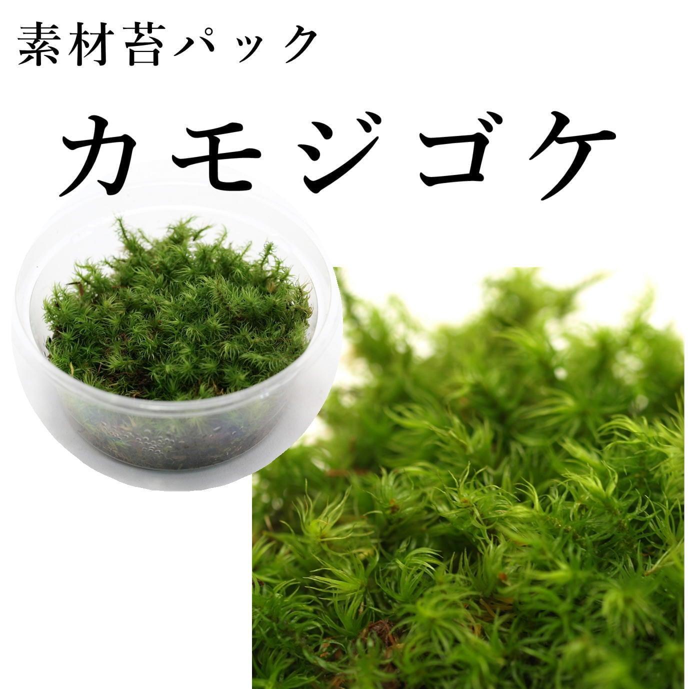 カモジゴケ 苔テラリウム作製用素材苔