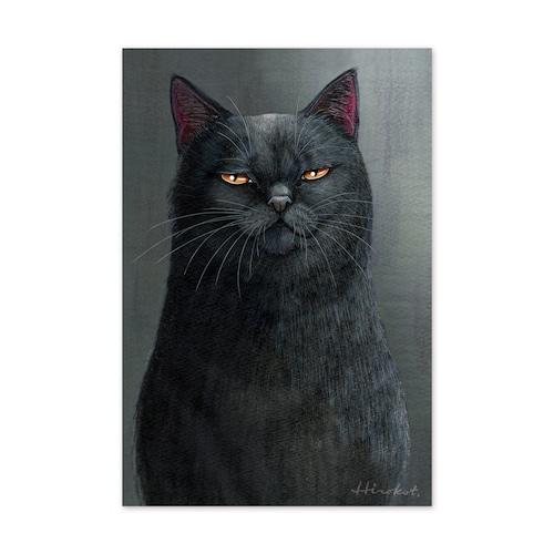 29.ある孤高の黒猫の肖像 ポストカード / The Portrait of a Solitary Black Cat Postcard