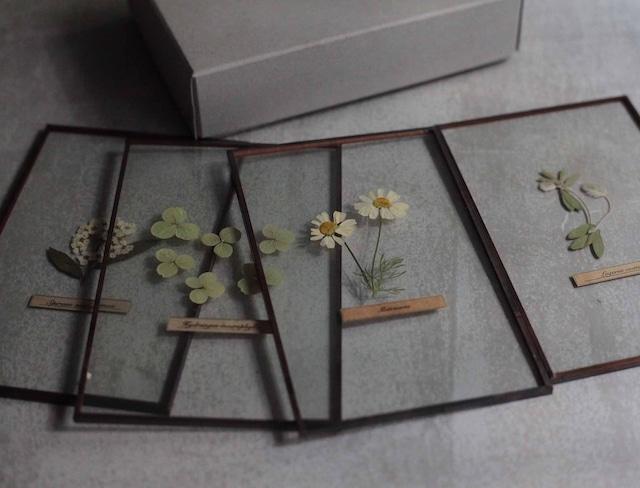 Box gift [Glass specimen × 4pieces] / ガラス標本4枚SET