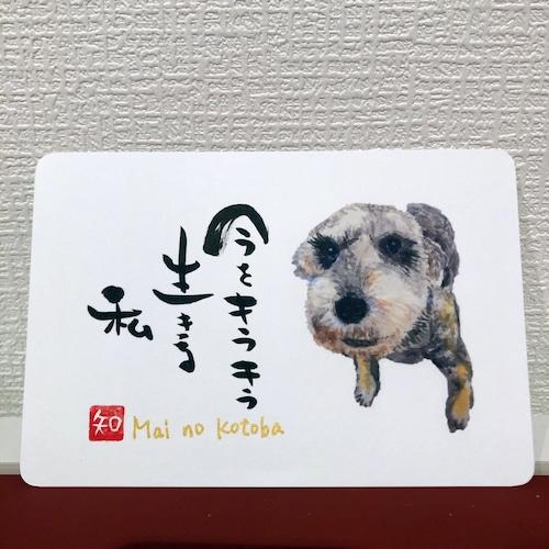 ポストカード 72(まい)