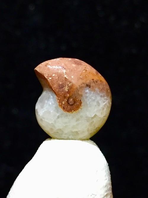 51) 謝恩価格「化石ケオン」