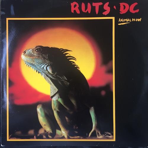 Ruts DC – Animal Now