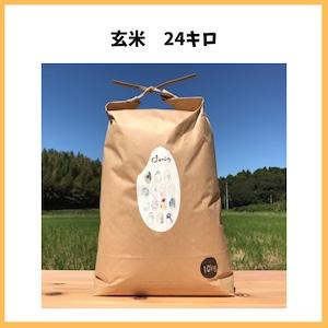 農薬も化学肥料も使わないで育てたお米【玄米 24kg】