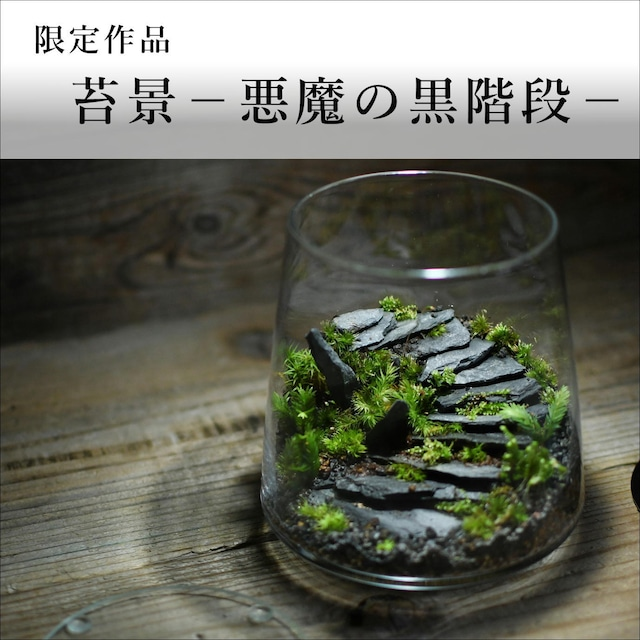 苔景-悪魔の黒石段-【苔テラリウム・現物限定販売】2021.10.22#1