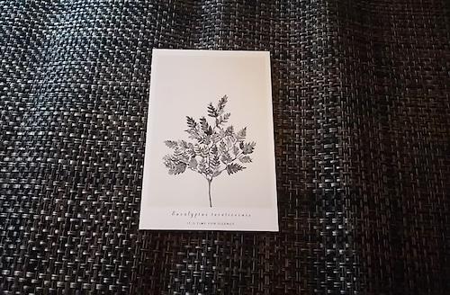 ポストカード 植物A