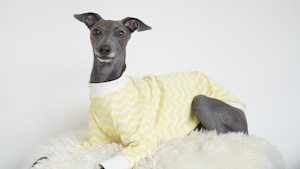 yellow zigzag pullover