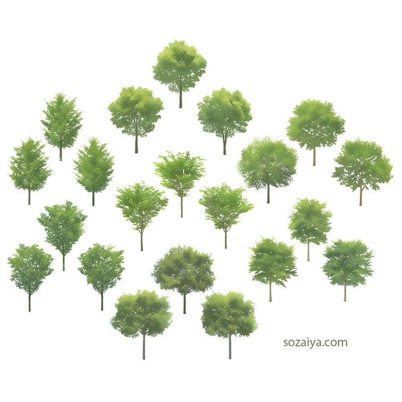 樹木イラストSketchUp 4b_001 - 画像2