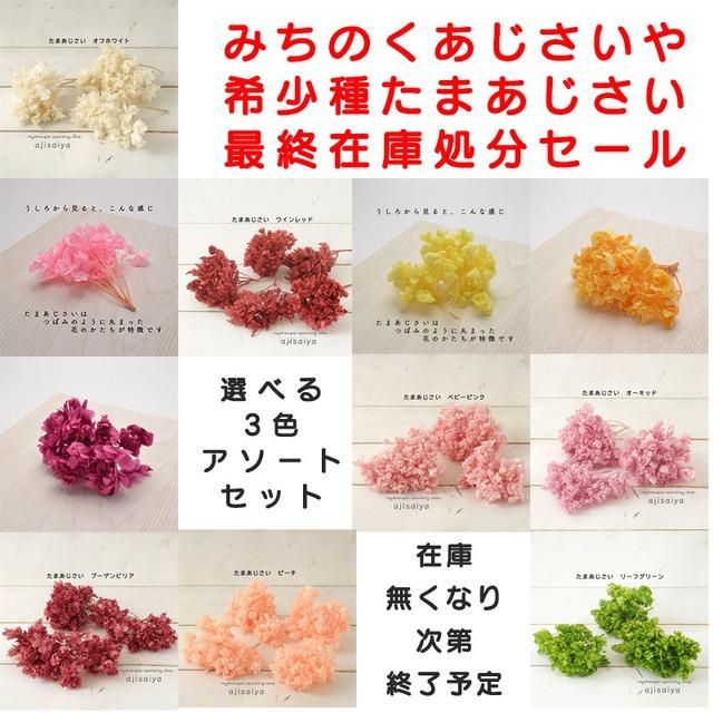 最終在庫処分セールです【選べる3色 】希少種 たまあじさい こわけ みちのくあじさいや <紫陽花 プリザーブド>