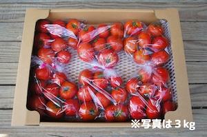ご家庭用フルーツトマト約6kg☆お得な業務用箱入り<送料無料※>