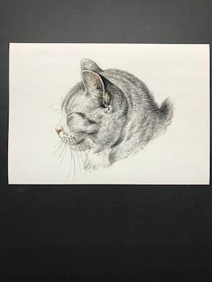 Sketch of a cat byJean Bernard レプリカ