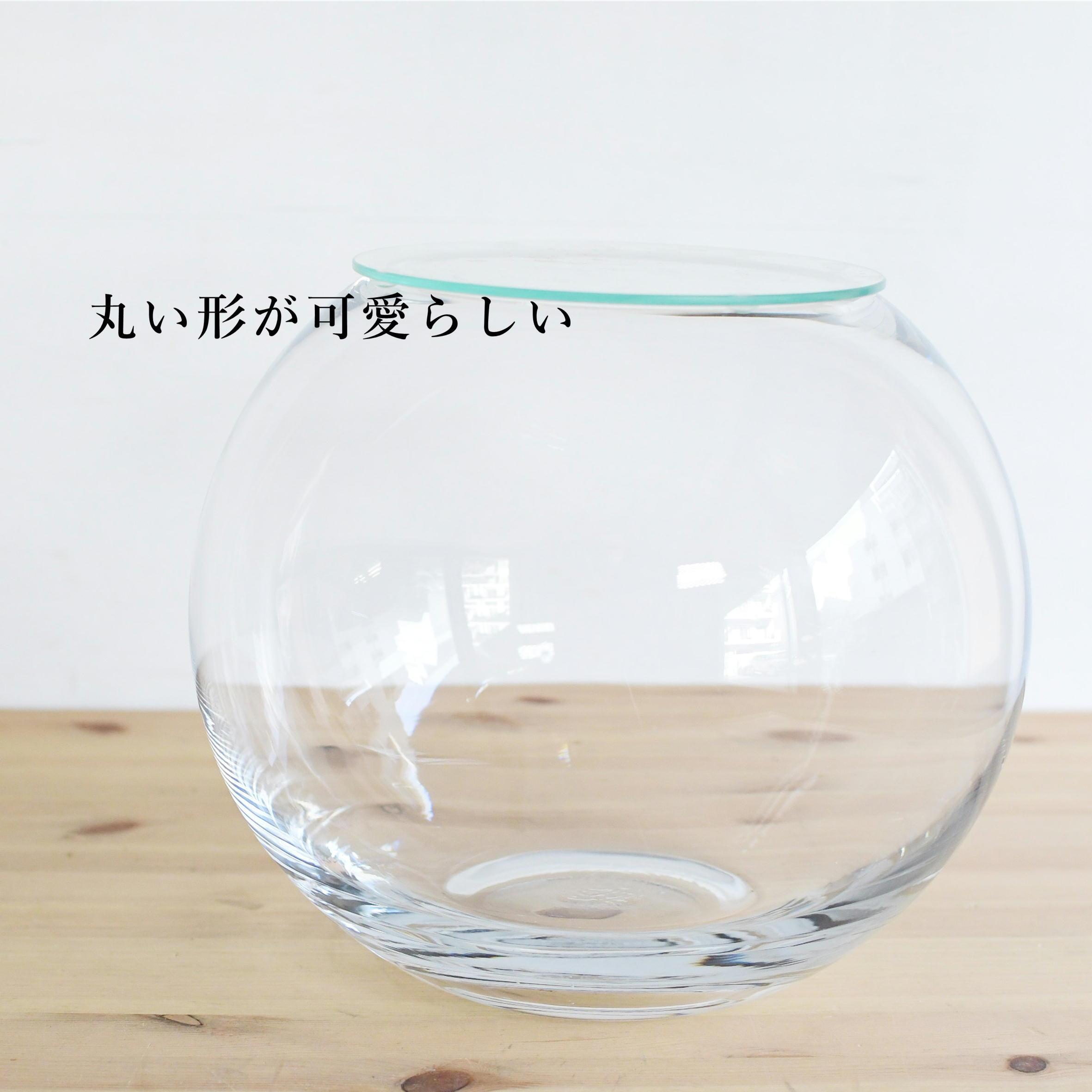 【ガラス容器】ラージボール・L ふた付き(250xh210mm)◆シダやランとの寄せ植えに