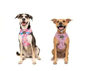 BIG & LITTLE DOGS【XL】Reversible Harness