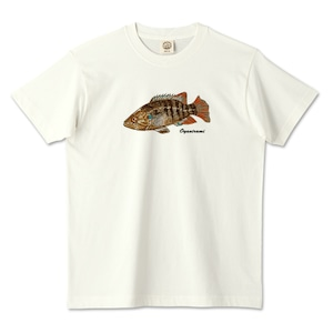 オヤニラミデザイン / オーガニックコットンTシャツ (TRUSS)
