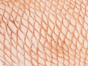 黒鯛(クロダイ)- ナチュラルヌメ