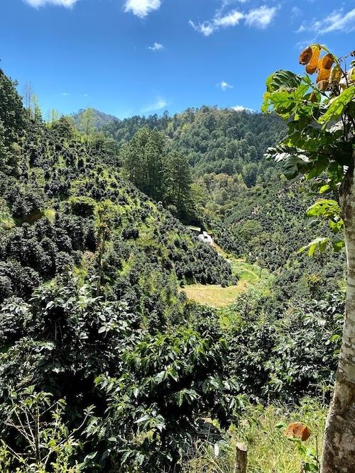 ニカラグア ペラルタコーヒー サンタマリア農園 210g