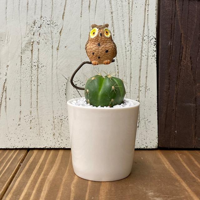 【受注生産品】ふくろう 丸サボテン 観葉植物 cy-br さぼてん カクタス インテリア グリーン ミニチュア かわいい 動物 フィギュア