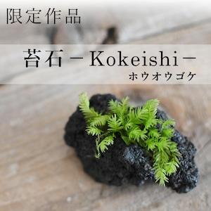 【現物販売】着生苔石ホウオウゴケ 10.13#6◆栽培容器付