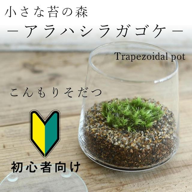 小さな苔の森−アラハシラガゴケ− 台形ポット◆こんもりそだつ【苔テラリウム】