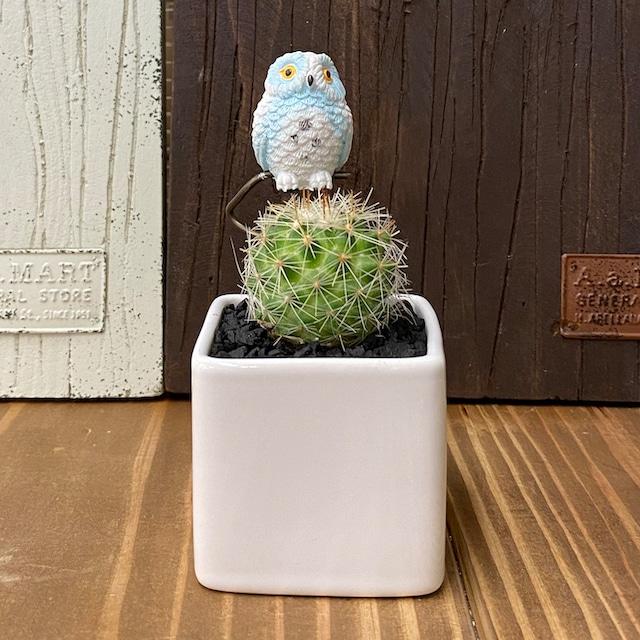 【受注生産品】ふくろう 丸サボテン 観葉植物 pr-wh さぼてん カクタス インテリア グリーン ミニチュア かわいい 動物 フィギュア