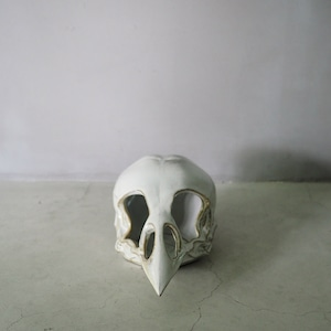 Bird Skull with Eye Socke
