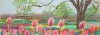 NO.84「雨曇り、チューリップ・4月」