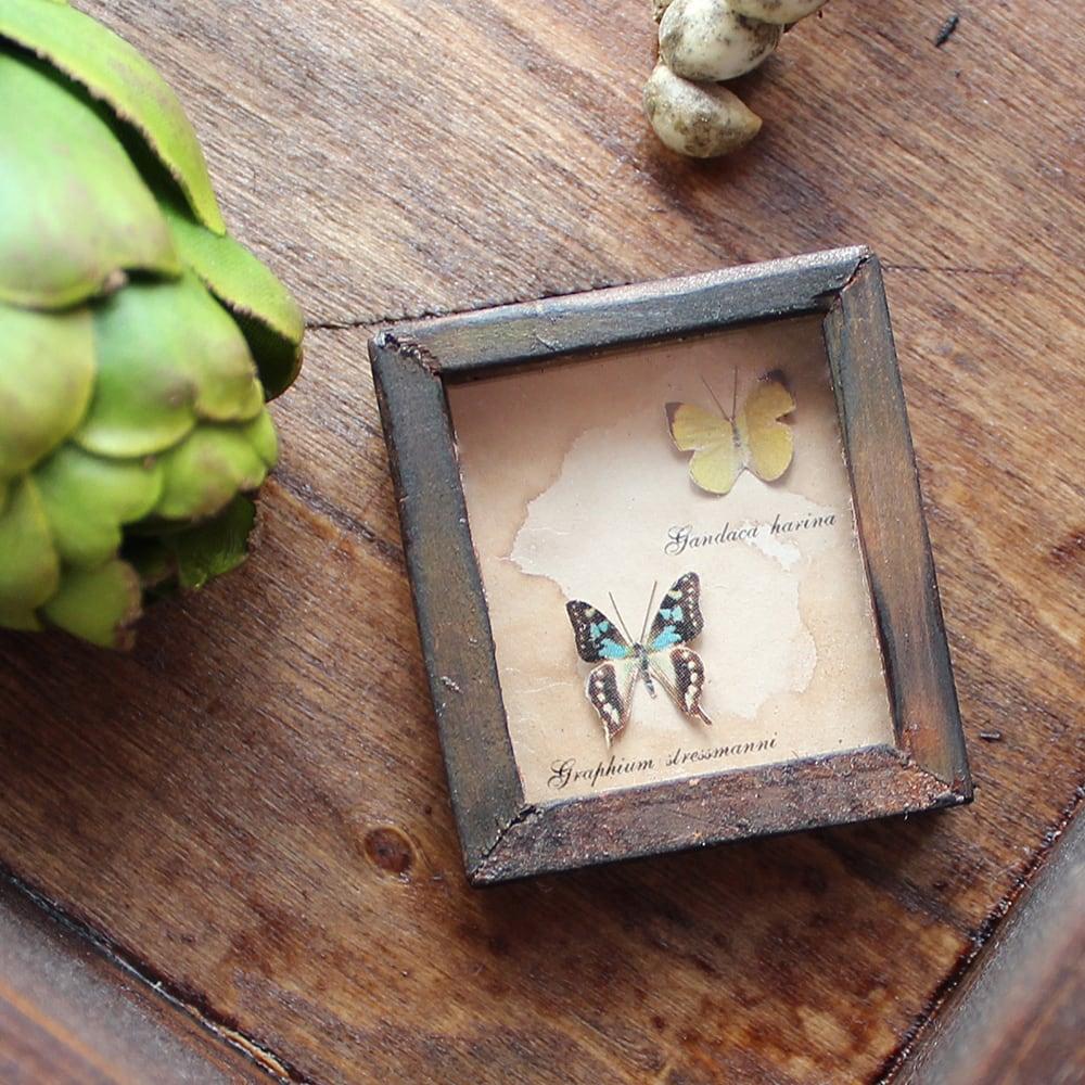蝶のミニチュア標本箱_黄と緑の2匹【胡蝶の夢】