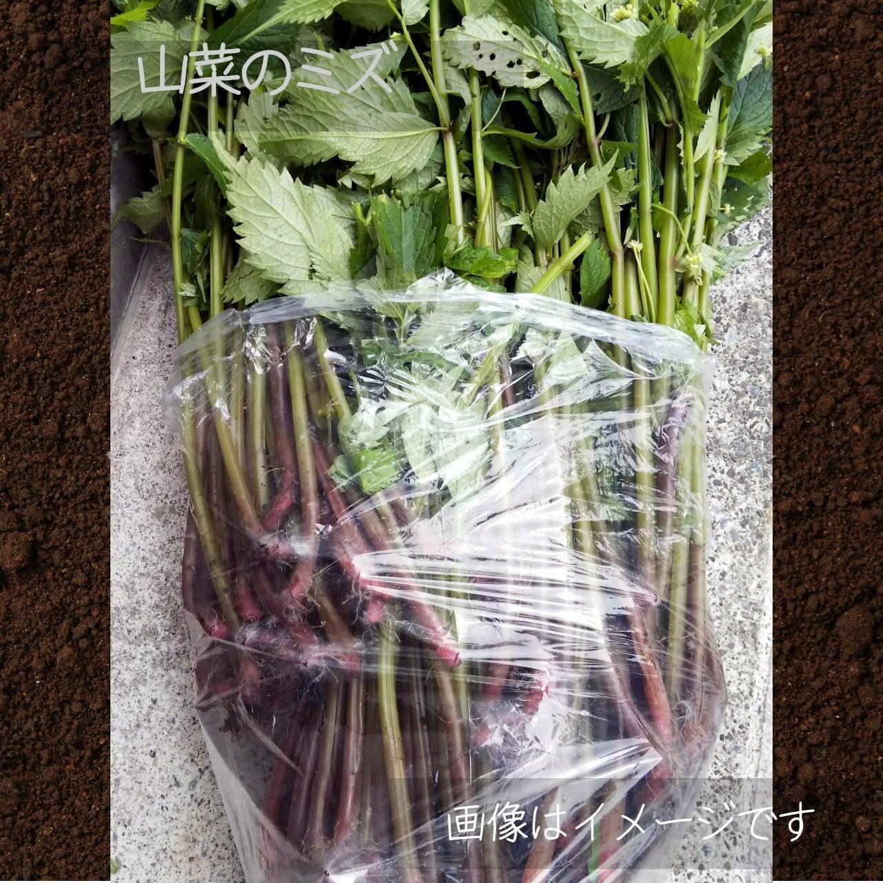 春の新鮮野菜 ミズ 1束: 5月朝採り直売野菜 5月29日発送予定