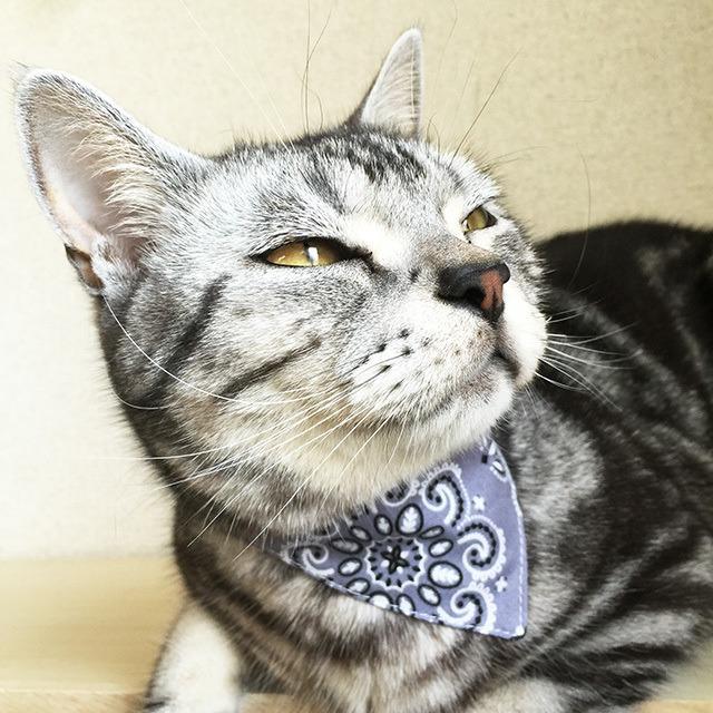 【ペイズリー柄】猫用バンダナ風首輪/選べるアジャスター 猫首輪 安全首輪 子猫から成猫