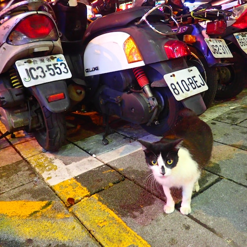 【taiwanese cat】ポストカード
