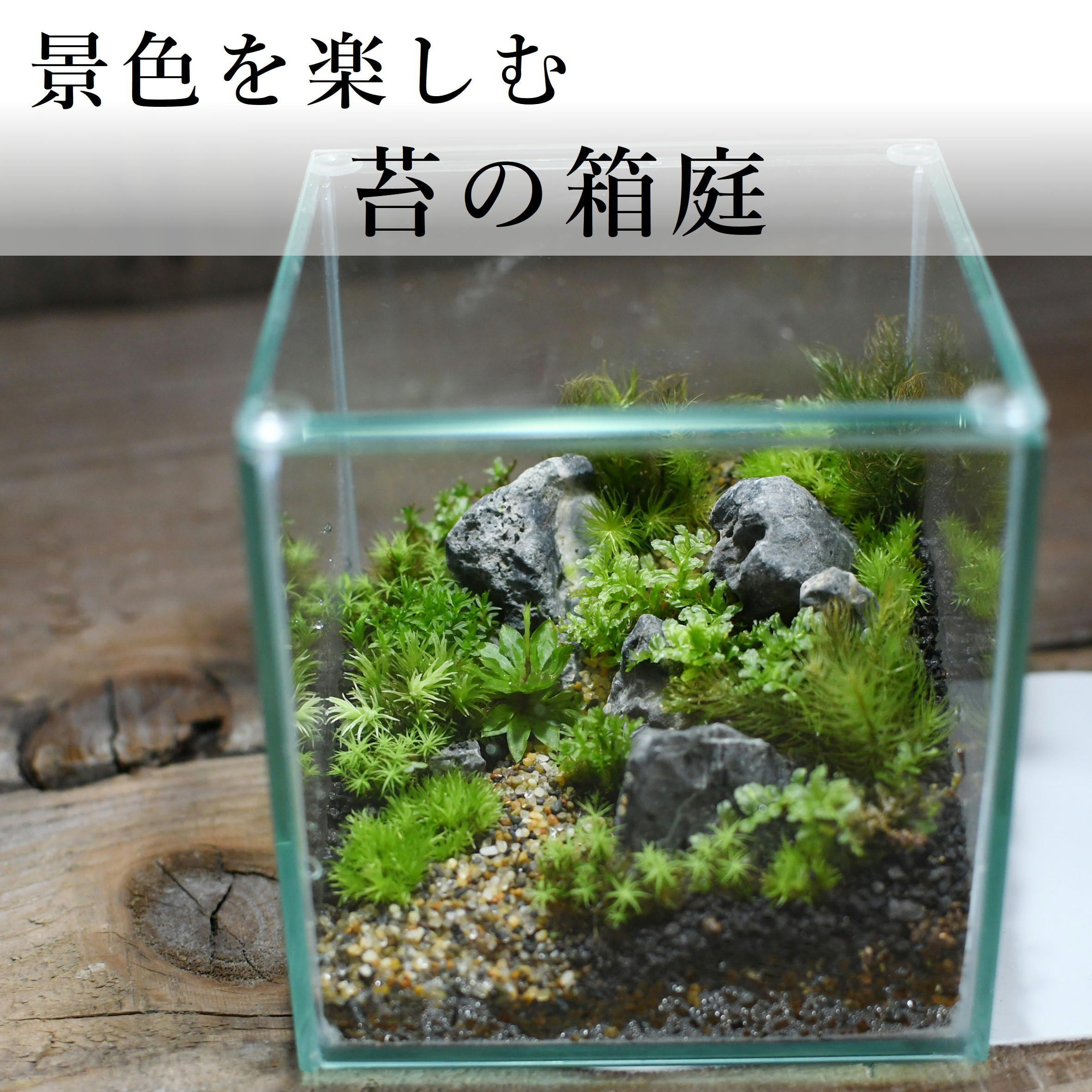 【景色を楽しむ苔テラリウム】苔景−コケの箱庭 −