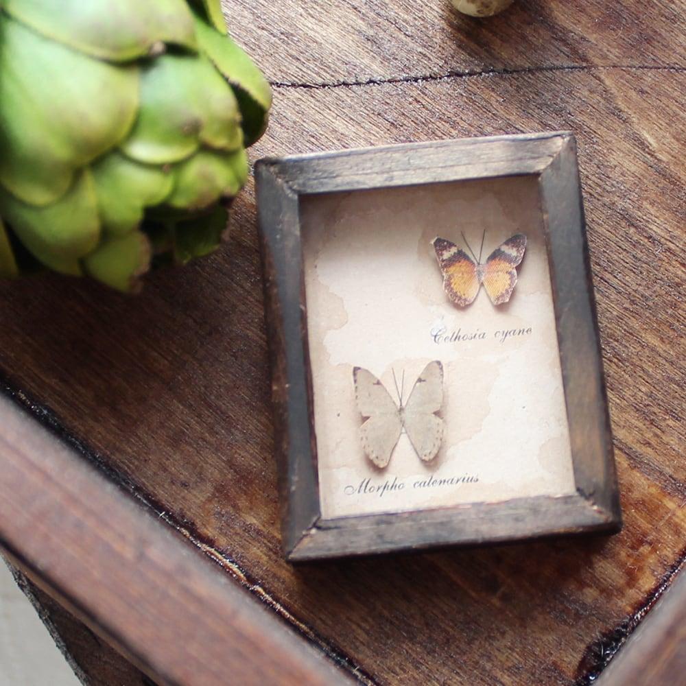 蝶のミニチュア標本箱_茶と白の2匹【胡蝶の夢】