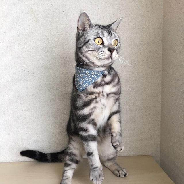 【桜柄】猫用バンダナ風首輪/選べるアジャスター 猫首輪 安全首輪 子猫から成猫