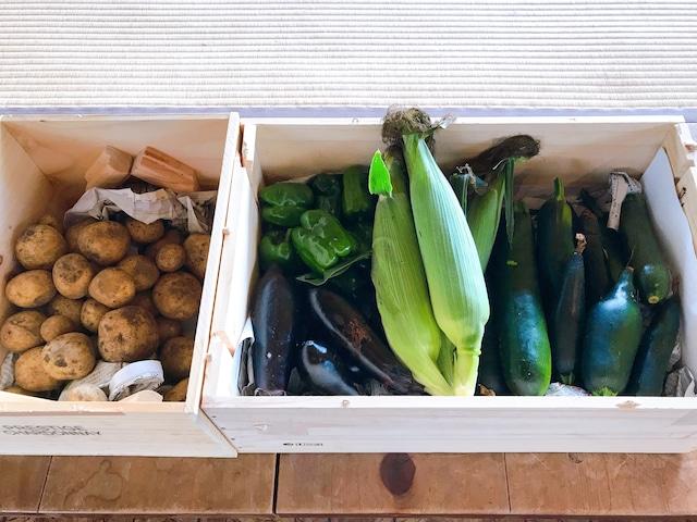嬬恋村鎌原地区産 朝採れ高原野菜セット 初回限定10セット