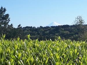 新茶 富士山と背比べをして育ったお茶(100g)