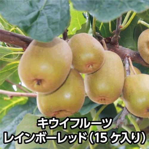 キウイフルーツ レインボーレッド(15ケ入り)【送料込み】