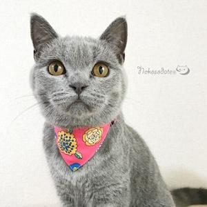 【サイケデリックフラワー柄】まじめな首輪・バンダナ風/選べるアジャスター 猫首輪 安全首輪 子猫から成猫