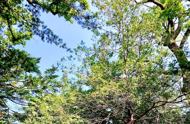 Photo Calm trees