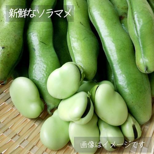 春の新鮮野菜 そらまめ 約400g: 5月の朝採り直売野菜 5月29日発送予定