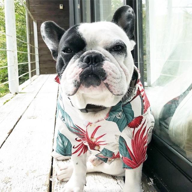 Dog wear アロハシャツ
