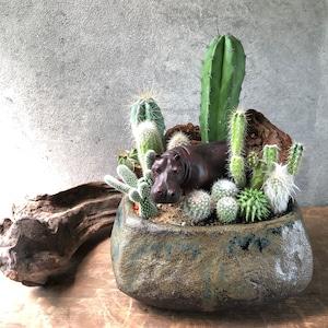 Hippopotamus カバ