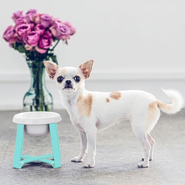 【予約】Pecolo Food Stand S hightallセット 犬の生活限定色 ティファニーブルー+選べるフードボウル陶器浅型or陶器深型or ステンレス